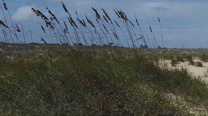 Landscape beach with tall grass