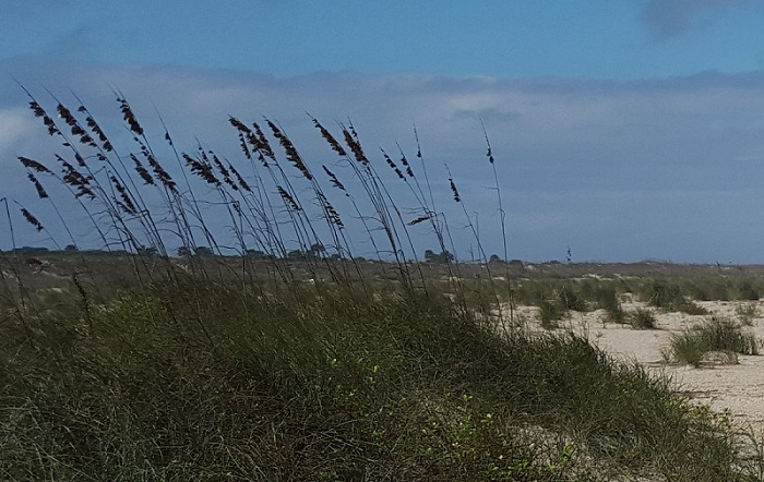 Beach with tall grass