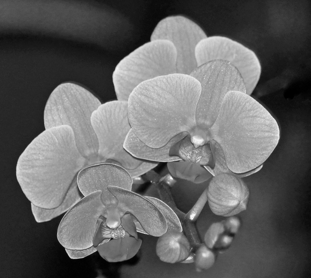 Tropical flowers in black and white